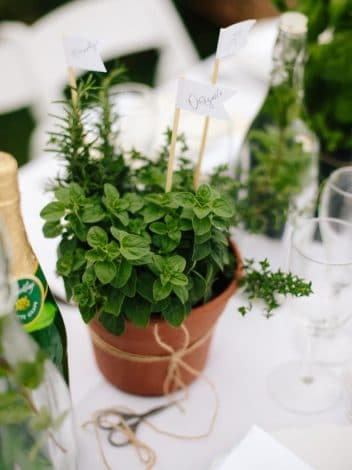 potted plants baby shower favors