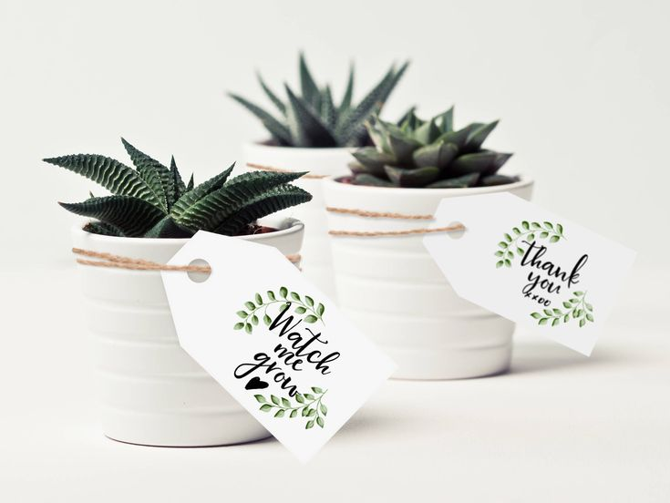 succulents baby shower favor