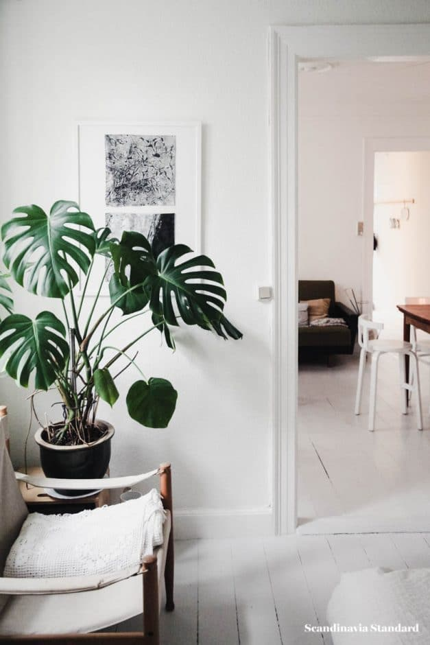 poisonous house plants to avoid with a baby
