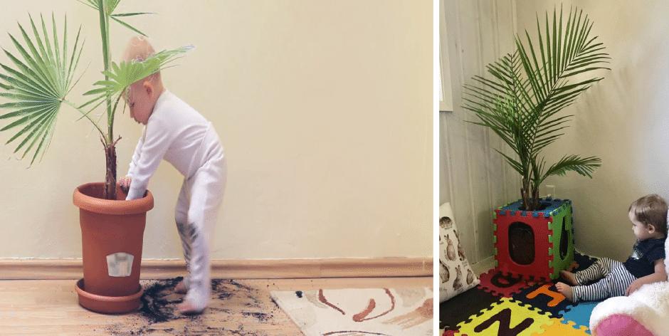 baby proof houseplants