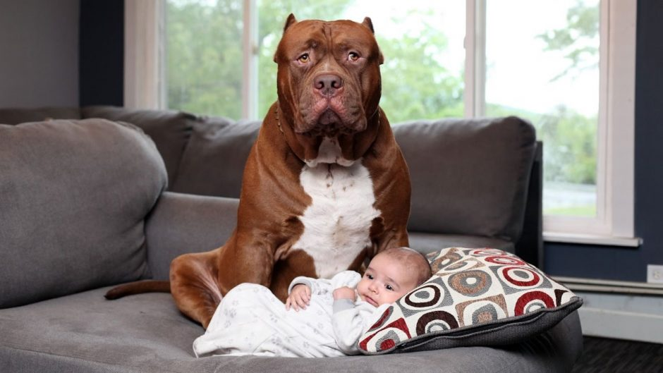 do not leave babies unattended with dogs