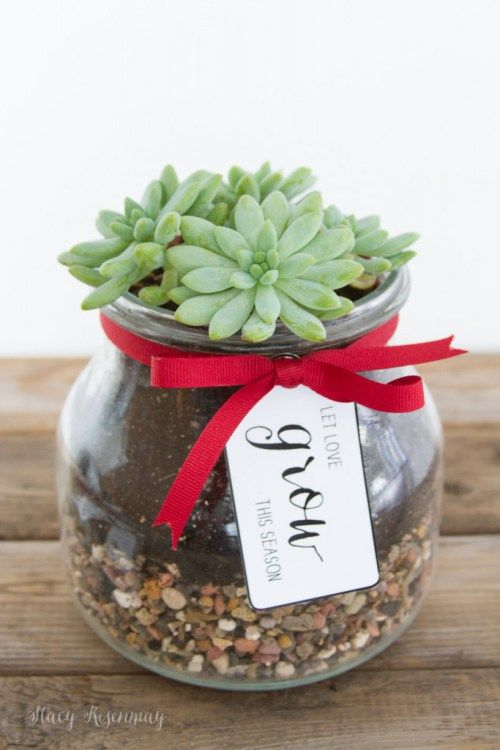 succulents christmas gifts for neighbors and friends and teachers and coworkers