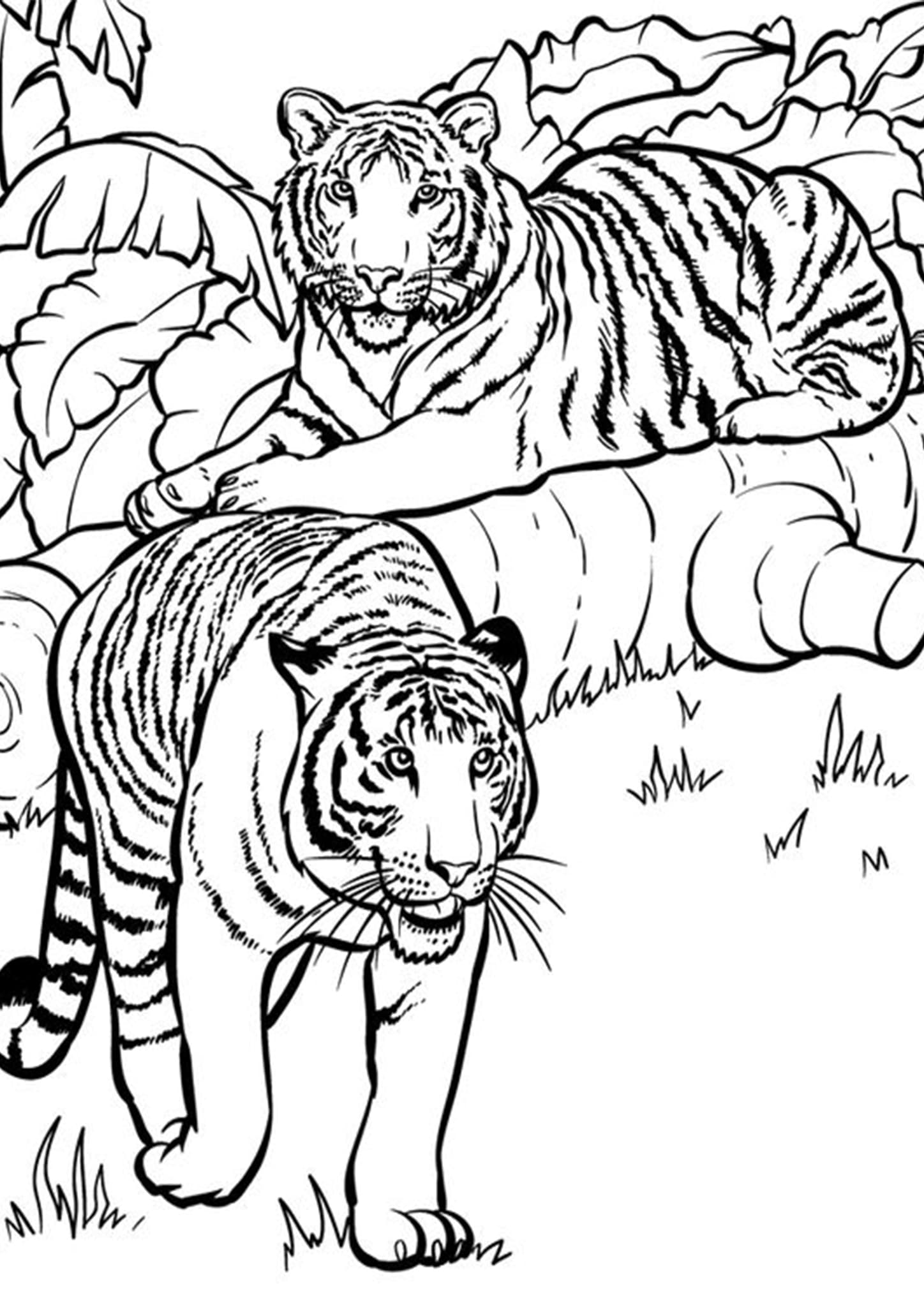 Free & Easy To Print Tiger Coloring Pages - Tulamama